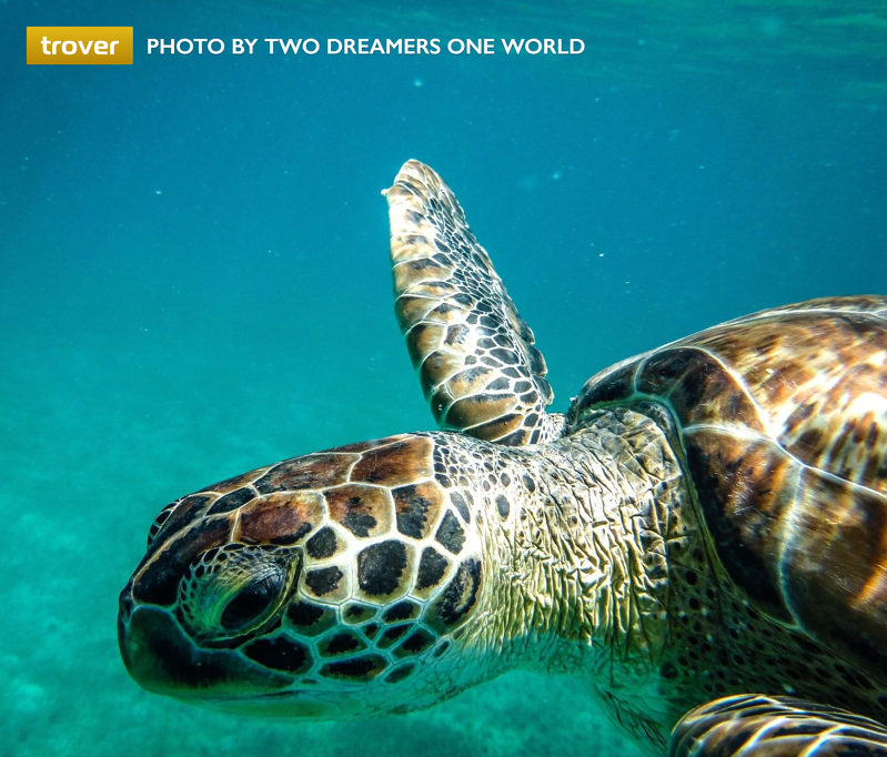 caribbean turtle trover two dreamers one world